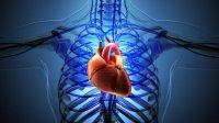 استفاده دانشمند ایرانی از پلهای رسانای الیاف کربن برای ترمیم مدارهای الکتریکی در قلب