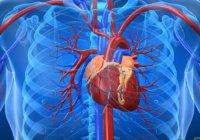 فناوری سلولهای بنیادی مسیر فعالان حوزه قلب و عروق را هموار میکند