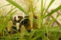 فتوسنتز گیاهان سریعتر میشود