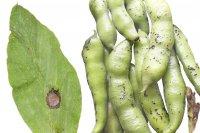کاربردی شدن علم قارچشناسی ۱۵ درصد خسارت بخش کشاورزی را کم میکند