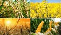 بررسی طرح یاوران تولید در بخش کشاورزی