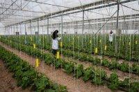 ۳۳ میلیارد تومان برای شرکت های دانش بنیانِ کشاورزی تخصیص یافت