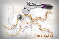 تصاویر سه بعدی از آنزیمهای ویرایش ژن ارائه شد